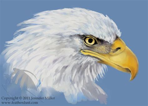 Decorah Eagle Sketch by Nambroth on DeviantArt
