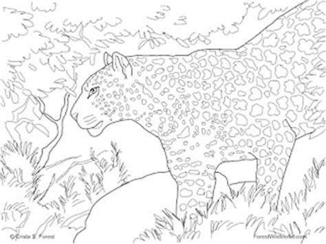 snow cat coloring page snow leopard colouring pages colorings net