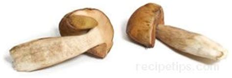Definition Porcini by Cep Or Porcini Definition And Cooking