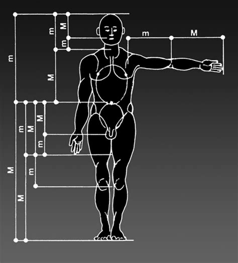 Goldener Schnitt Und Fibonacci Folge Mit Illustration