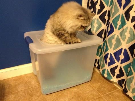 How To Keep Cat Litter The Floor by A Proper Pooper Cat Litter Boxes Storage Bins And Tops
