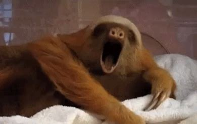 10 sleepy animal gifs guaranteed to make you yawn