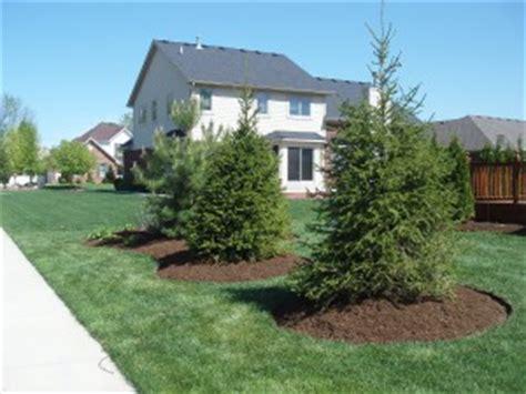 Landscape Ideas Around Pine Trees Bark Mulch Total Lawn Care Inc Lawn Maintenance