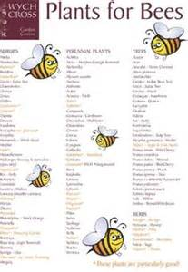 bee do on bees honey bees and beekeeping