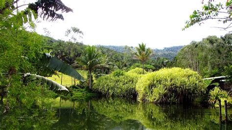 cairns botanical gardens cairns australien tropenparadies tauchhauptstadt