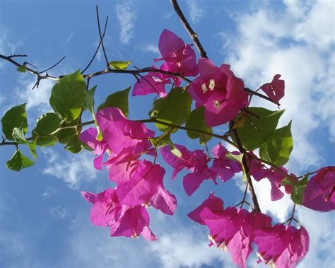 foto fiori hd sfondi primavera hd fiori rosa sfondi hd gratis