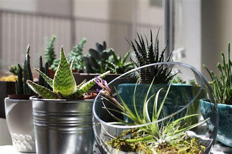 apartment plants indoor plants ahbe lab