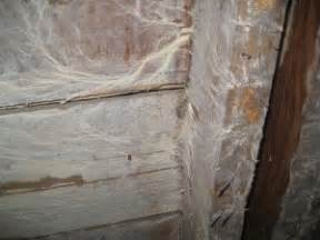 is white mold dangerous in my home nusite waterproofing