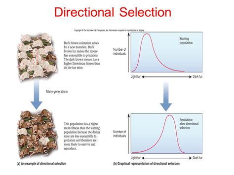 4 26 2017 natural selection ppt download