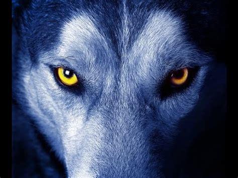 lobos alfa y omega, lucha con un equipo ganador youtube