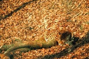 Where Can You Find Jaguars These 27 Camouflaged Animals Are So You Ll To