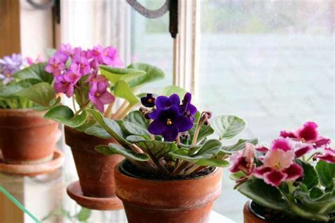 plantas florales de interior las m 225 s lindas plantas de interior con flor