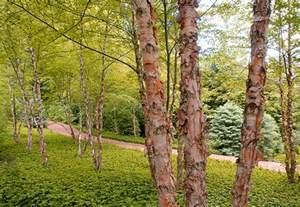 best small ornamental trees for zone 6