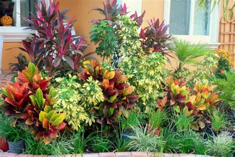 Landscaping Backyard Landscaping Ideas South Florida Florida Landscape Plants