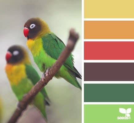 17 best images about the colors on