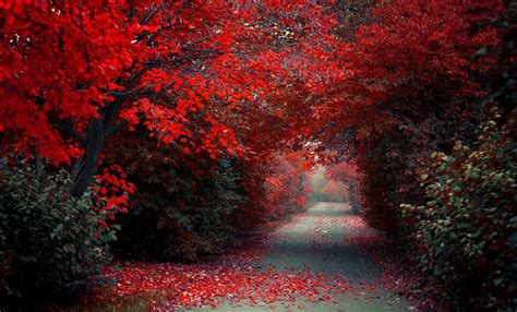path road trees red fall nature landscape selective