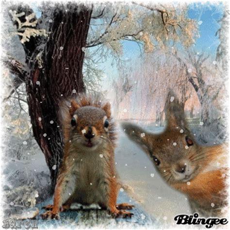 622222068592 Artsi Glitter Pets Squirrel winter squirrels picture 127847179 blingee