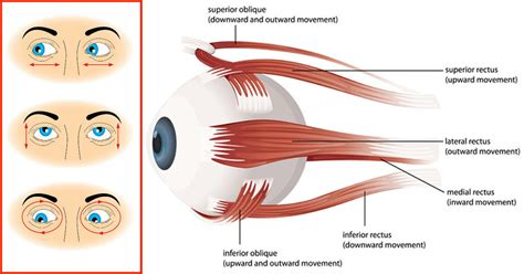 how to naturally improve your eyesight with these 16 eye