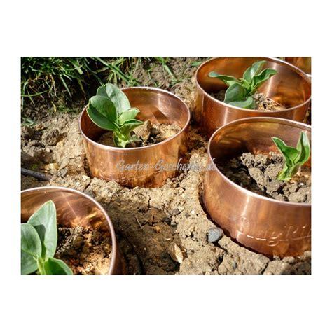 pflanzen gegen schnecken 3826 pflanzen gegen schnecken gartenversand richard ward
