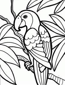 parrots birds colouring pages