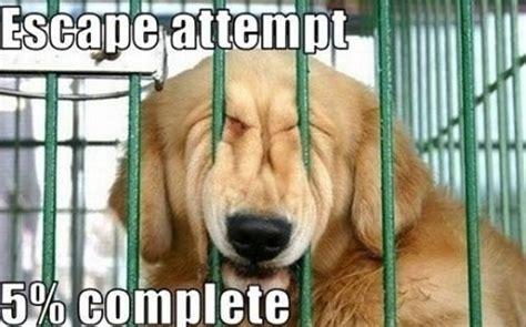 Dog Laughing Meme - funny dogs lifepopper com