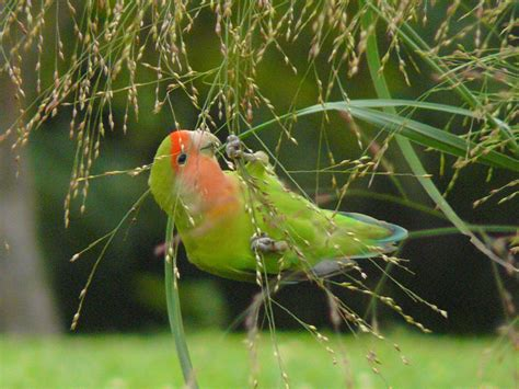 naturescaping using veld gardens to attract seed eating birds