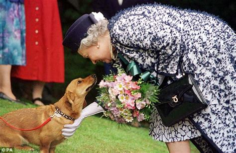 queen elizabeth dog the queen s corgis holly and willow could be the last for