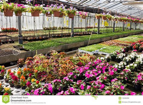 Gardenia Nursery Flores En Invernadero Im 225 Genes De Archivo Libres De