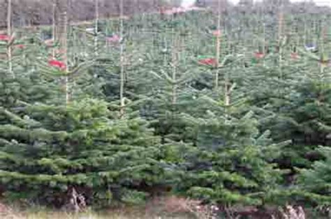 best christmas tree farm in nj tree farms in new jersey