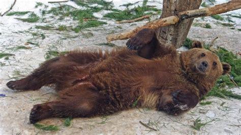 videoclub el jardin los animales de un zoo ucraniano podr 237 an morir de hambre rt