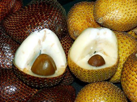 potensi salak pondoh  kabupaten magelang salak fruit