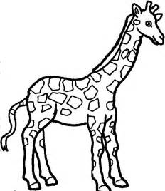 what color is a giraffe free coloring pages of giraffe drawing