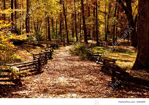 picture  fenced path  autumn woods
