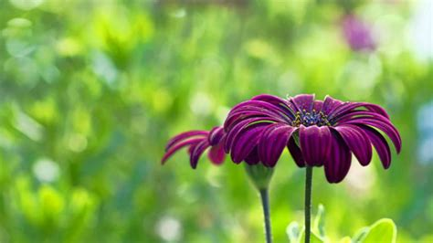 wallpaper hd widescreen high quality desktop flower most beautiful flowers wallpapers hd flowers wallpapers