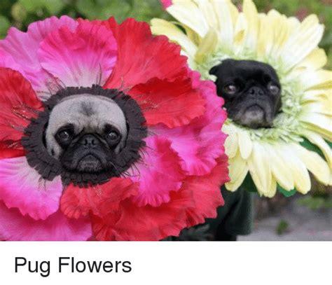Flowers Meme - 25 best memes about pug pug memes