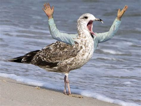 Birds With Arms   Actress Album