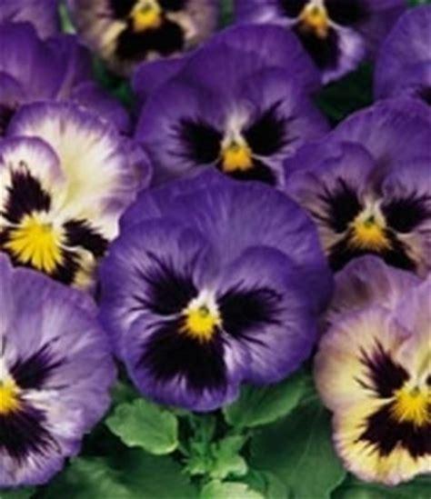 simboli dei fiori simboli e significati dei fiori significato dei fiori