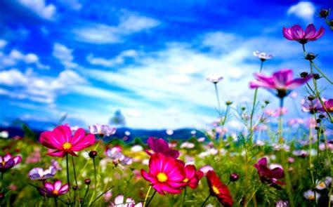 fiori di co primaverili rubriche corriere eusebiano