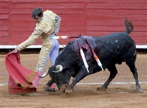 fighting facts some facts about bull fighting in the canary islands