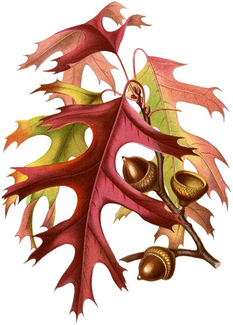 fall botanicals