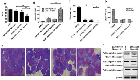 synergistic effect of nf κb inhibitor and jnk inhibitor combination