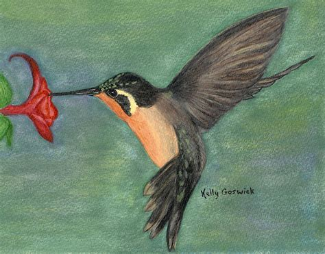 little brown hummingbird by kelly goswick