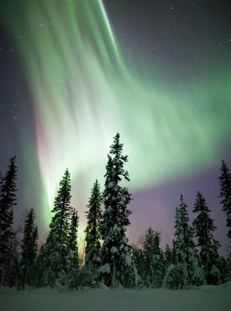 light up the night viewing the northern lights with gray