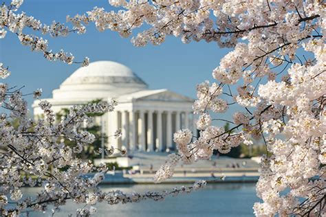 cherry blossom festival dc family guide to the national cherry blossom festival in