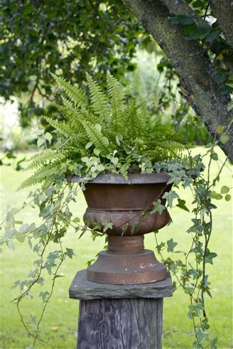 Ferns In Planters by What S Better Than An Urn Filled With Ferns And Trailing