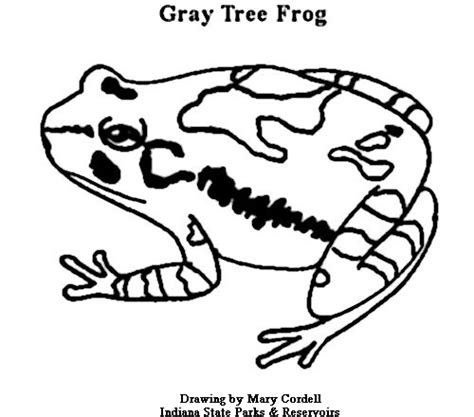 coloring page of red eyed tree frog rainforest tree frog coloring page pages grig3 org