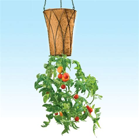 deluxe revolution upside down tomato planter the green head