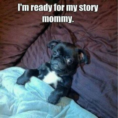pug stories pug bedtime stories and bedtime on