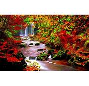 Autumn Scenery Stream River In Trees With Red