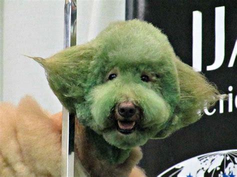 dog grooming  wrong page